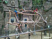 Попугаи свободно летают под куполом экзотариума.
