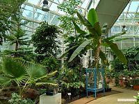 Оранжерея. Огромное растение справа - банан.