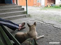 Талисман базы: собачка по кличке «Барсик».