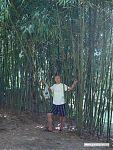 А я сижу, жую бамбук... с трудом верю, что вот ЭТО — на самом деле трава!