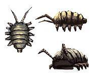 Мясной жук.