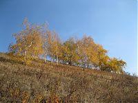 «...на ковре из жёлтых листьев...»