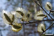 Природа пахнет и распускается. Каждая былинка стремится вырасти в огромное дерево!