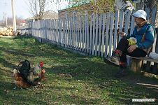 Пока участники ждут автобуса, руководитель подкармливает деревенских курочек.