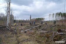 Участок вырубки леса.