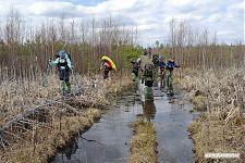 Даже если вырубка засажена молодыми деревьями, стоит случиться понижению, как образуется болото с камышами.