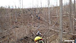 Пробираться через участок леса после пожара было тяжелее всего.