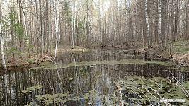 А эта чувашская река - спокойная и медленная.