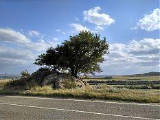 Забавное дерево-бонсай где-то на границе Ставропольского края.