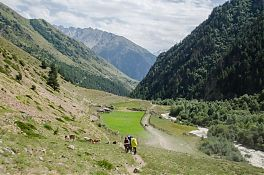 На этих полях пасутся коровы, овцы и козы.