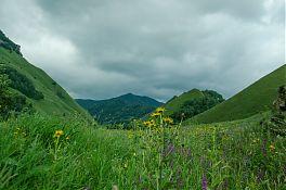Цветочки и горы.