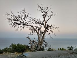 Красивое засохшее дерево недалеко от нижней станции канатной дороги