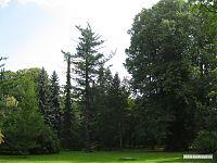 Деревья и зелёные лужайки.