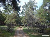 Клочок соснового бора. Судя по ровным рядам деревьев, не совсем природного происхождения.