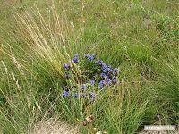 Круг из грибов называют ведьминым. А круг из цветов тогда, наверное, должен называется феечным?