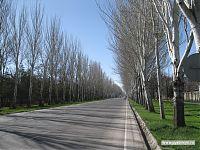 До президентского домика дорога выглядит вот так.